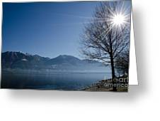 Tree On Lakefront Greeting Card