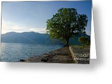 Tree On The Lake Front Greeting Card