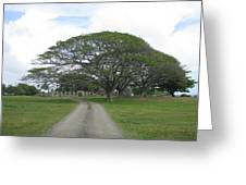 Tree Over Ruins Greeting Card