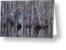 Tree Reflection Abstract Greeting Card