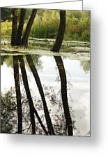 Tree Reflection Greeting Card