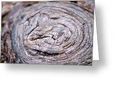 Tree Rings Greeting Card