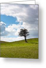 Tree Greeting Card by Semmick Photo