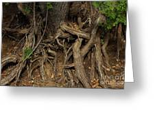 Tree Root's In The Creek Bed Greeting Card