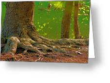 Tree Roots Greeting Card