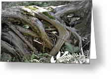 Tree Roots2 Greeting Card