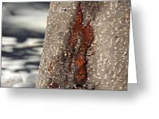 Tree Sap Greeting Card
