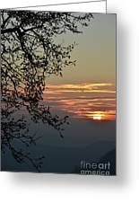 Tree Silhouette At Sunset Greeting Card