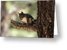 Tree Squirrel Greeting Card