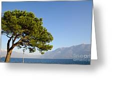 Tree Standing Close To A Lake Greeting Card