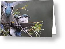 Tree Swallow - Standing Guard Greeting Card