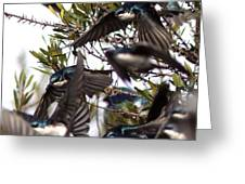 Tree Swallow - All Swallowed Up Greeting Card