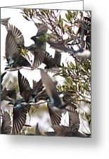 Tree Swallow Frenzy Greeting Card