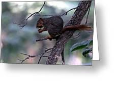 Tree Top Nut Greeting Card