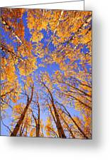 Tree Tops Greeting Card