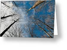 Tree Tops On The Wild Turkey Trail Greeting Card