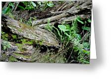 Tree Trunk And Ferns Greeting Card