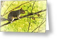 Tree Visitor Greeting Card