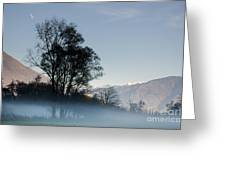 Tree With Fog On Field And Greeting Card