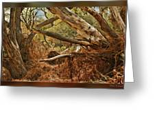 Tree Woods Greeting Card