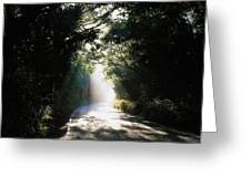 Treelined Road Greeting Card