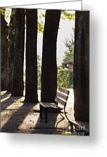 Trees And Bench Greeting Card