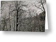 Trees And Hillside Greeting Card