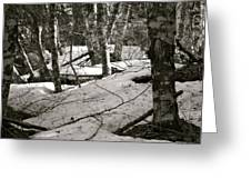 Trees And Snow In April Greeting Card