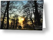 Trees And Sun In A Foggy Day Greeting Card
