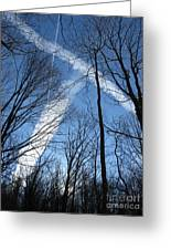 Trees And Trails Greeting Card