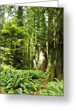 Trees At Cathedral Grove Greeting Card