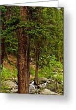 Trees By The Stream Greeting Card