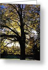 Trees During Autumn Greeting Card