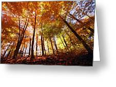 Trees In Autumn Greeting Card