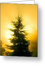 Trees In Fog At Sunrise Greeting Card