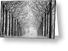 Trees In Lines Greeting Card