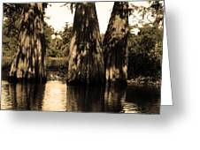 Trees In The Basin Greeting Card