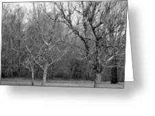 Trees In The Mist 2 Greeting Card