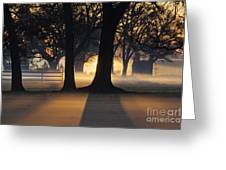 Trees In The Morning Mist Greeting Card by Jeremy Woodhouse