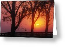 Trees In The Sunrise Greeting Card
