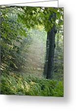 Trees In The Woods In The Early Morning Greeting Card