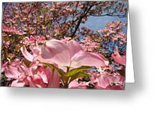 Trees Nature Fine Art Prints Pink Dogwood Flowers Greeting Card by Baslee Troutman