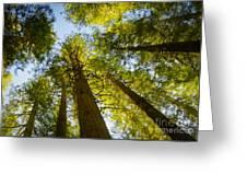 Trees Of Devoto Greeting Card