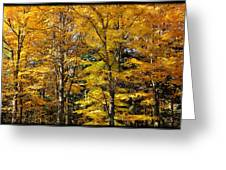 Trees Of Gold Greeting Card