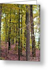 Trees Of Golden Hues Greeting Card