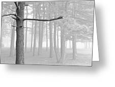 Trees On A Foggy  Morning Greeting Card
