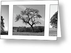 Trees On Canvas Greeting Card