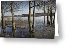 Trees On Flooded Riverbank No.1001 Greeting Card