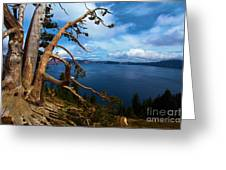 Trees On The Crater Greeting Card
