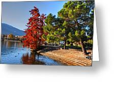 Trees On The Lake Front In Autumn Greeting Card